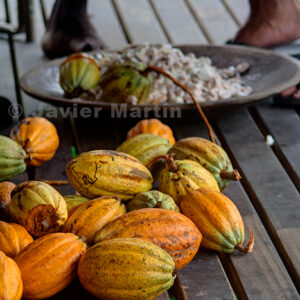 Cacao Seed pods waiting to be opened and seeds removed for fermentation as observed at the bottom