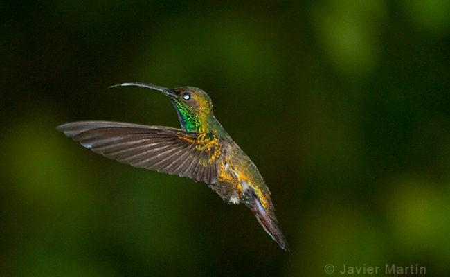colibries_0008