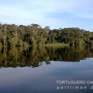 tortuguero_843