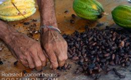 roasted_cocoa_beans