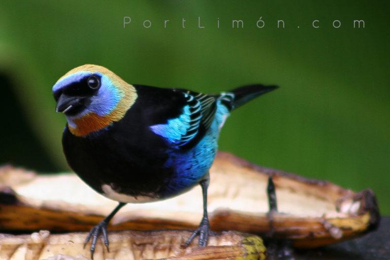 Bird Watching Experience (only for avid birders)
